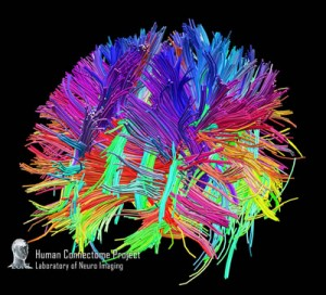 White Matter Fibers Harvard Dataset